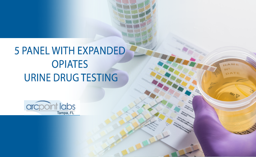 5 panel with expanded opiates urine drug testing